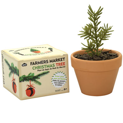 Grow Your Own Christmas Tree